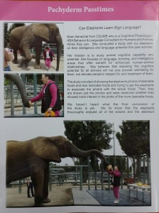 elephantmagzoo